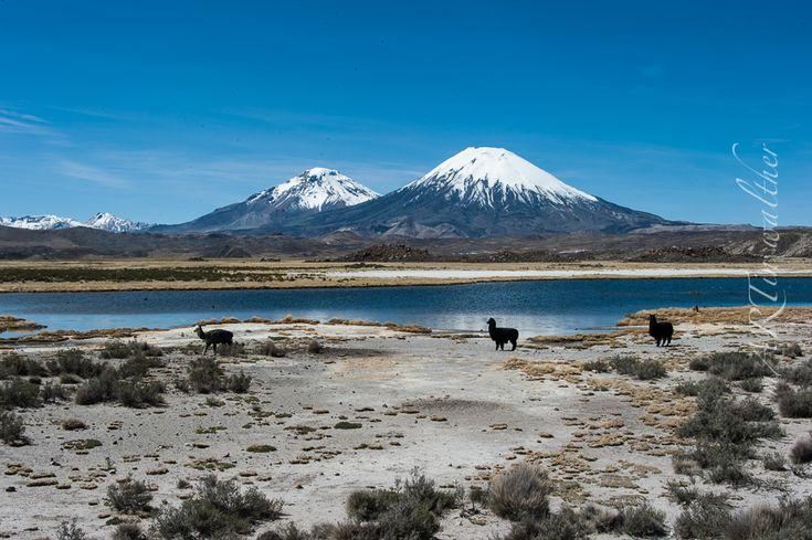 Zona Norte de Chile - Am Paso Jama verlassen wir Argentinien und reisen auf chilenischem Boden weiter. Der Grenzübertritt kostet uns ca. zwei Stunden – unser argentinischer Guide und sein Pick Up werden genaustens überprüft. In Chile fahren wir selber mit einem 4x4 Auto von San Pedro de Atacama bis nach Arica mit einem Abstecher bis zum Lago Chungará nahe der bolivianischen Grenze.