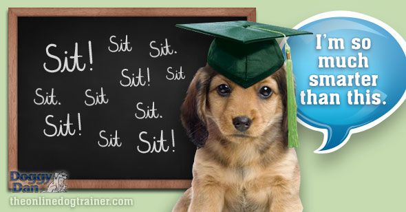 What you don't learn at puppy training classes