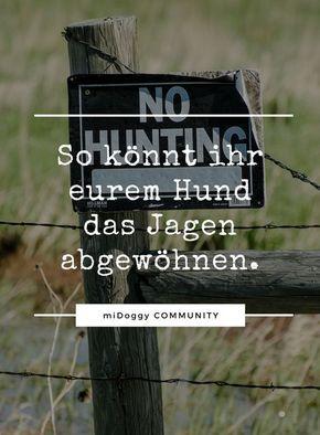 Jagdverhalten abgewöhnen?