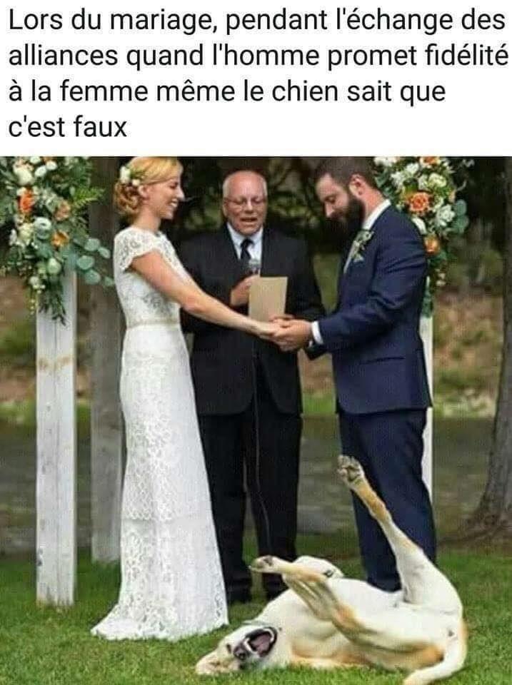 L'infidèle Mariages amusants, Photos drôles de mariage