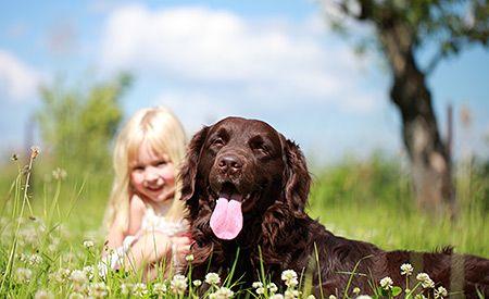 Zecken – Natürliche Mittel für Mensch und Hund