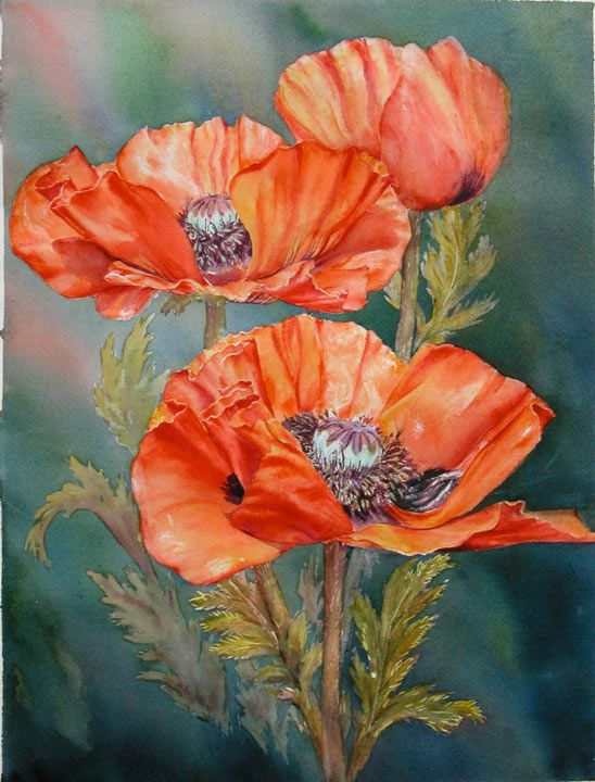 Marianne Broome — Red Poppies (548x720) | Drawing and ...