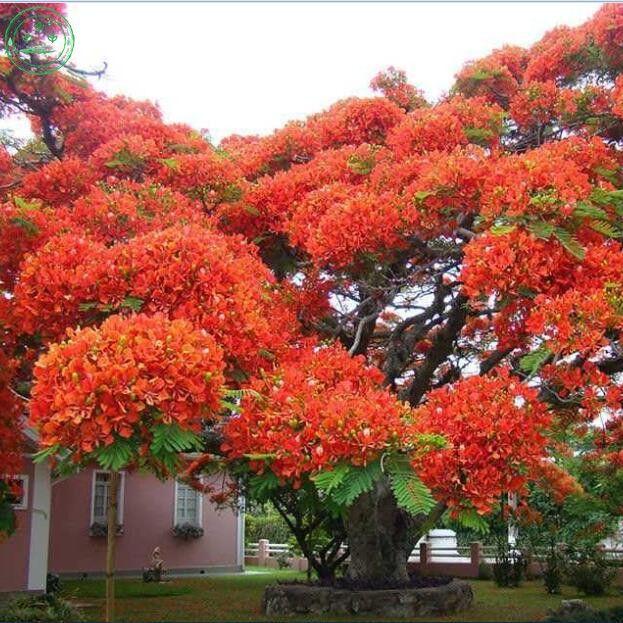 Las 25 mejores ideas sobre arbustos en pinterest - Arbusto pequeno con flores ...