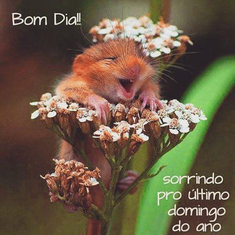 Bom domingo, gente amada!🙏😻🌹🍀💝