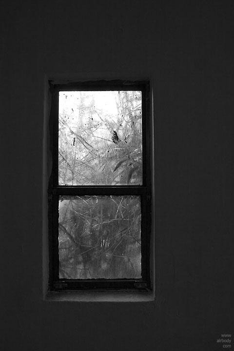 2005/12/10  남산식물원