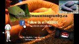 Pacific hagfish/Les myxines/Eptatretus stoutii  C'est un animal de la famille des Lamproies. C'est une des anguilles primitives, les myxines et se trouvent généralement sur le fond vaseux.  http://aime.animauxzoogranby.ca/profile/Pacific-hagfish