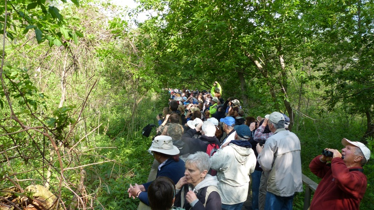 Birders for as far as the eye can see! It's truly The Biggest Week in American Birding! Leica V-lux 3 #biggestweek https://www.facebook.com/photo.php?fbid=444659792229065=a.444659055562472.117192.355103211184724=3