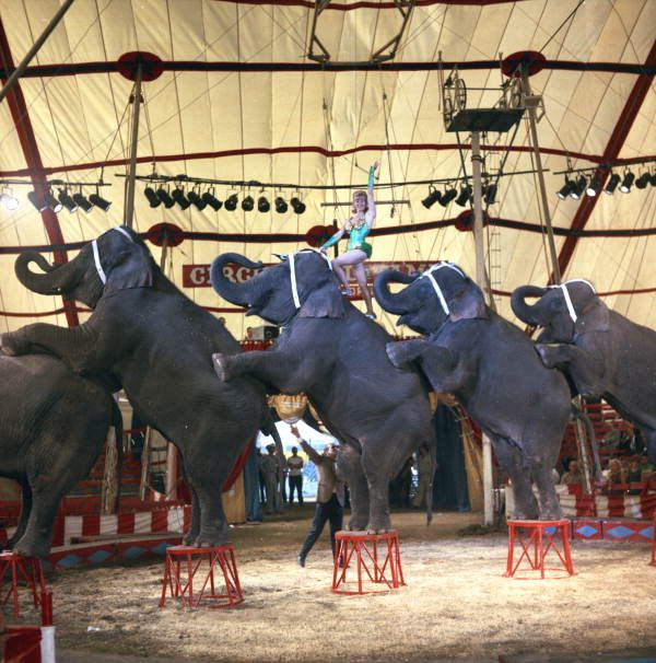 183 best images about Vintage Circus Prom on Pinterest ...