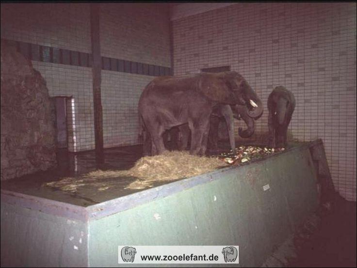 magdeburg zoo 60er und 70er   Zooelefant.de - Geschichte