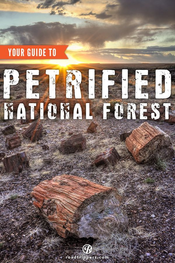 Explore Petrified National Forest in Arizona. Road trip USA. Road trip ideas.