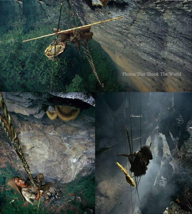 Honey gatherers in Nepal.