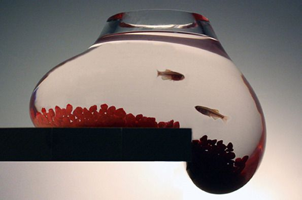 17 best images about fish bowls and etc on pinterest sea for Cool fish bowls