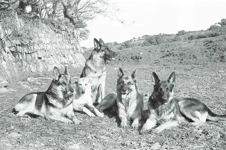 The original gang, Twinkie, Mel, Anika, Tasha and Callie. 198- ?