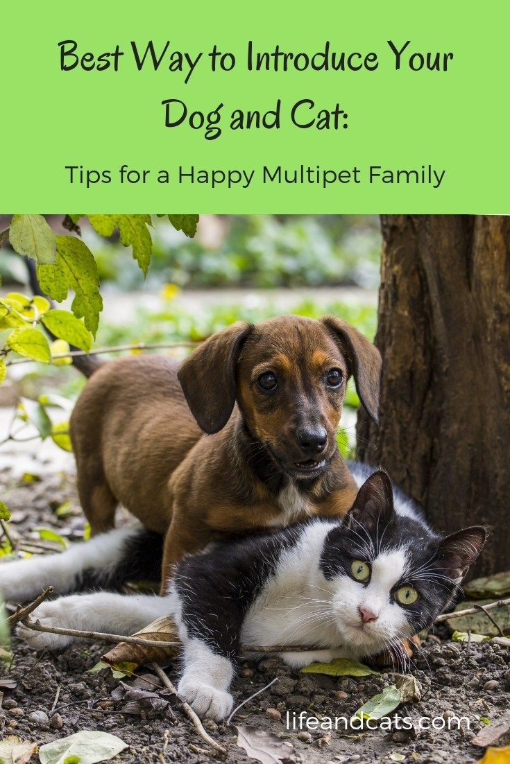 The Best Way To Introduce A Dog To A Cat Life Cats Introducing Dog To Cat Introducing Puppy To Cat Cat Care