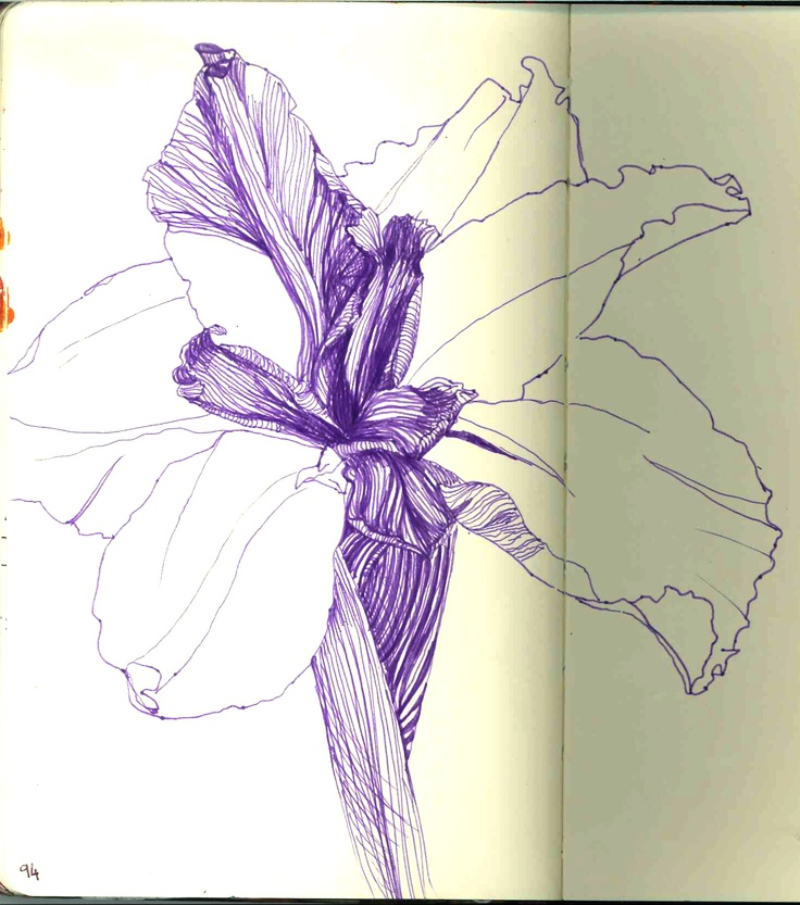 Line Drawing Of Iris Flower : Images about iris line drawings on pinterest