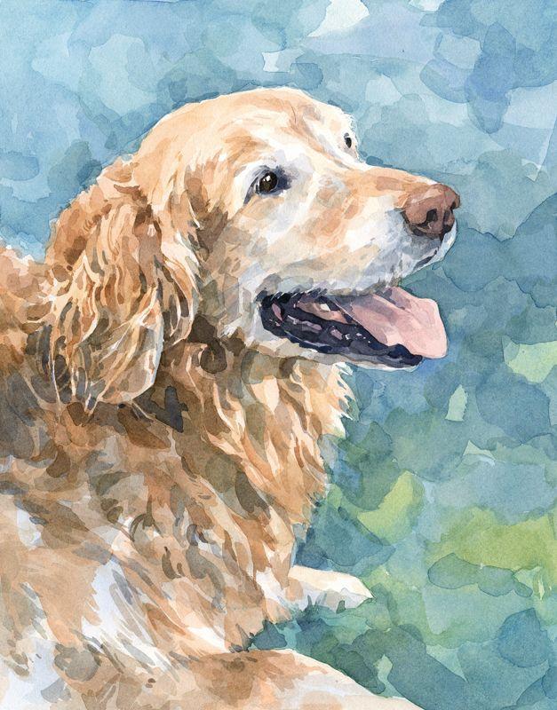 watercolors   golden retriever watercolor
