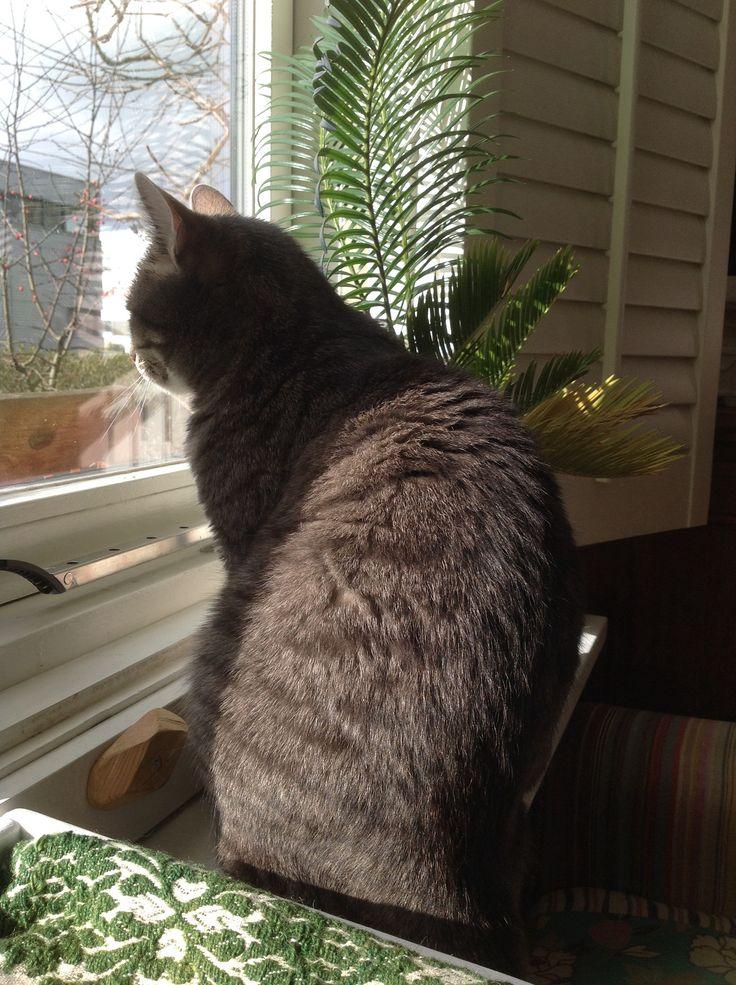 Mijn gekke kat Ollie blijft na een zwaar gevecht met de buurkat liever in het zonnetje achter het raam.