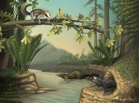 L'evoluzione dei mammiferi ha avuto una rapidissima accelerazione molto prima della scomparsa dei dinosauri: a metà del Giurassico, infatti, vi fu un'incredibile fioritura di variazioni nell'assetto del corpo e nella struttura e forma dei denti, molto più elevata di quelle avvenute prima o dopo. Alcune di quelle modificazioni sono poi rimaste stabili per centinaia di milioni di anni.