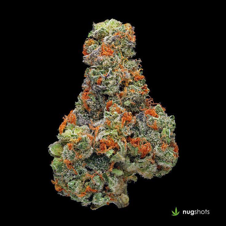 UK Cheese Cannabis Strain