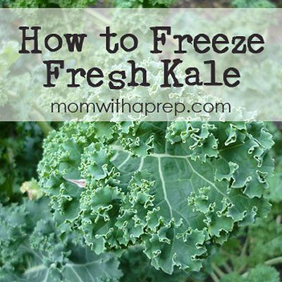 How to Freeze Raw Fresh Kale for smoothies  |  {Mom with a Prep}  #foodstorage