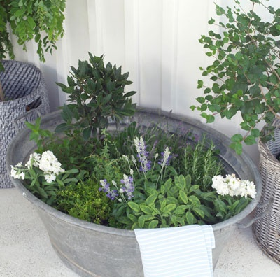 Little  herb garden in zinc wash tub.  Repinned by www.claudiadeyongdesigns.com  www.thegardenspot.co.uk