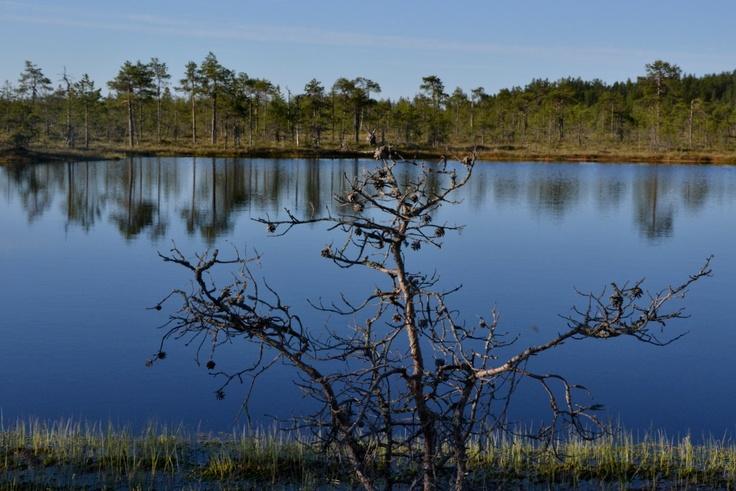 Suolampi Kirveslammen lenkin varrella Leivonmäen kansallispuistossa.
