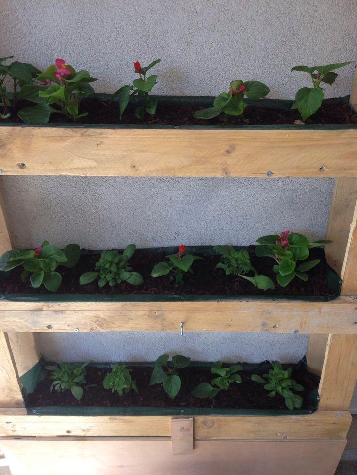 Un mur végétale fait maison #deco #home #nature #murvegetale
