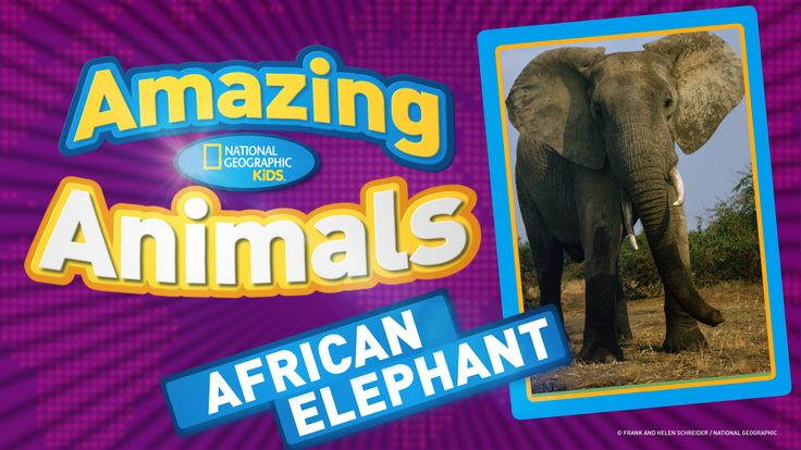 Kids' Games, Animals, Photos, Stories, and More -- National Geographic Kids