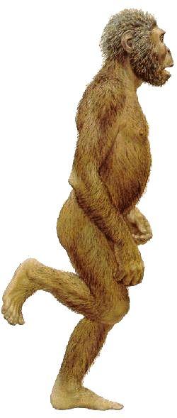 Paranthropus robustus (by Jay Matternes)