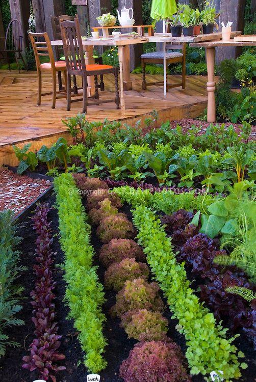 Красивая Огород и двор Палуба и патио fuirniture, ряды цветных салатов, мангольд, моркови и других садовых растений съедобный