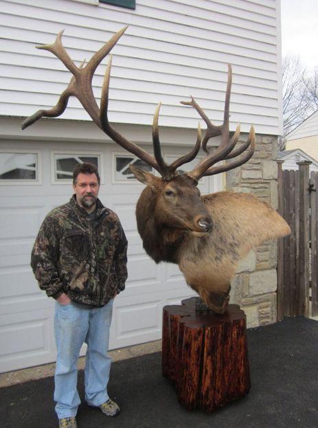 Elk mount fireplace - photo#37