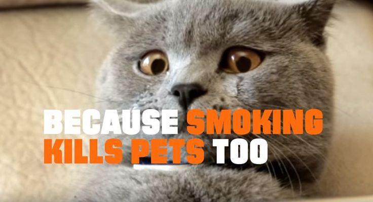 Las campañas antitabaco suelen incidir en los nefastos efectos que este vicio tiene sobre la salud: pulmones ennegrecidos, toses crónicas, cáncer, enfisemas y hasta impotencia. En vista de que las advertencias sobre la propia salud no terminan de erradicar los humos, se ha apelado a otros aspectos como