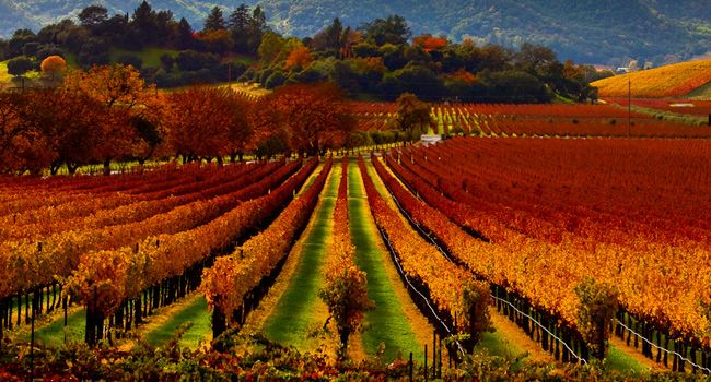 23 best images about fall in napa valley on pinterest for Best time to visit napa valley wine country