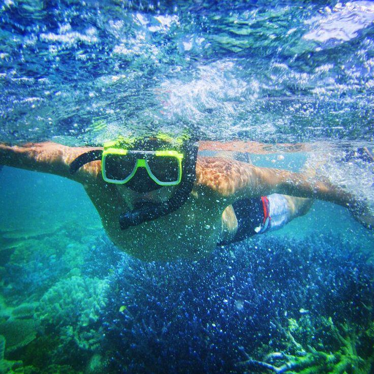 Underwater life in Great Barrier reef