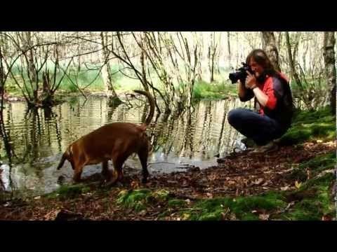 ▶ Mit Andreas Kieling durch Brandenburgs Weltnaturerbe - YouTube
