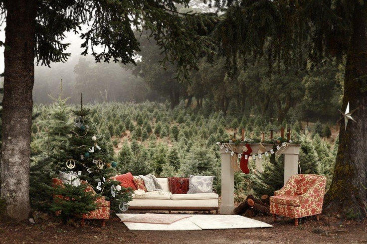 12 best images about holiday outdoors on pinterest family photo sessions holiday mini session for Living room sessions christmas