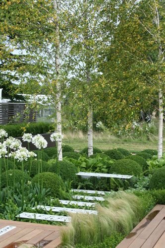 ...Contemporary Contemplation Garden    By garden designer OneAbode Ltd. This contemporary and stylish garden features structural planting with a graphic formation of spectacular white flowering agapanthus...