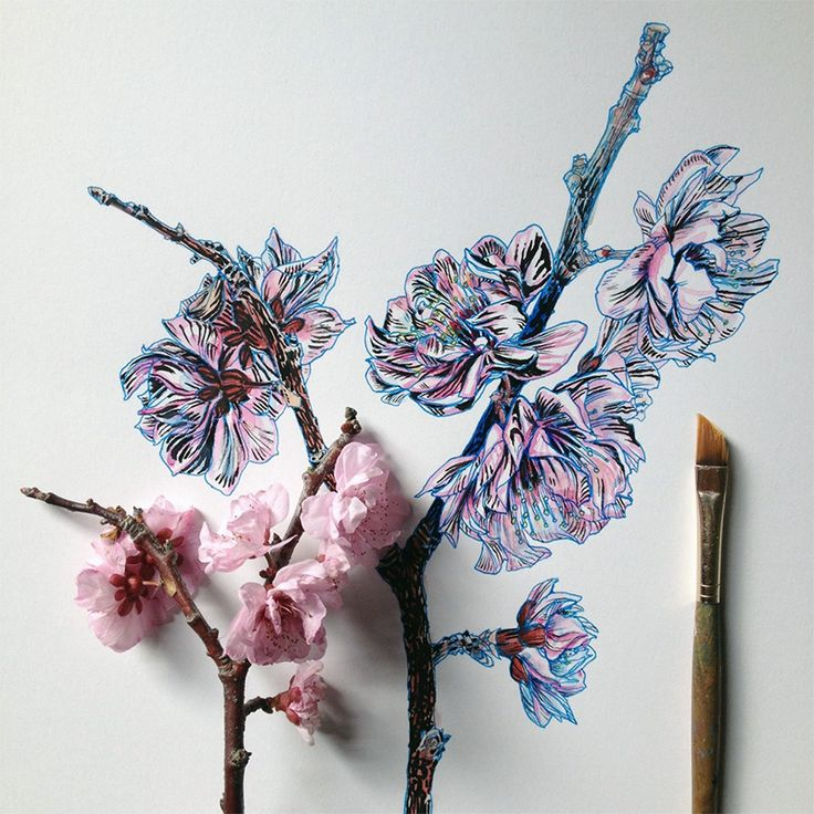 Scientific illustrator and artist Noel Badges Pugh has an incredible knack for drawing flora and fauna. He recently illustrated an entire field guide about bees and keeps a regular Tumblr, Art in Progress & Completion, where he posts these tantalizing drawings of buds and blooms