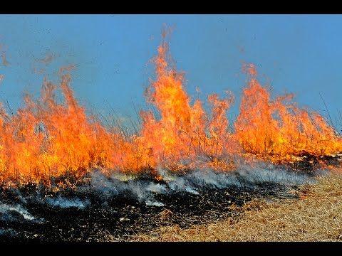 Anderson Creek #Wildfire  Impact on #Livestock