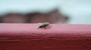 Come eliminare le mosche: tutti i rimedi naturali - Non Sprecare