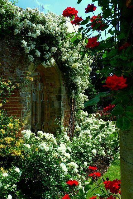 Beautiful Garden home flowers rose white garden climbing rose