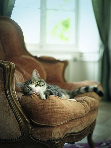From 'The French Cat' by New Zealand photographer Rachael Mckenna