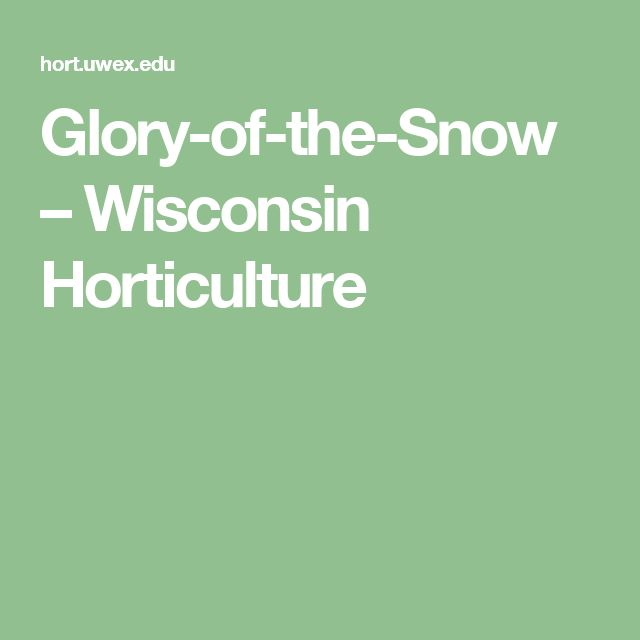 Glory-of-the-Snow – Wisconsin Horticulture