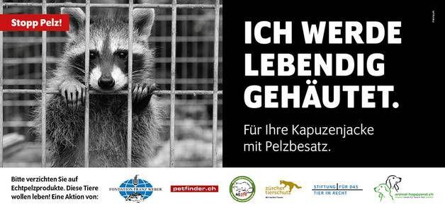 Inserate Tiervermittlung & Informationen für Tierhalter - Die Schweizer Plattform für kostenlose Tierinserate
