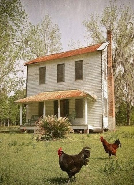 love this farmhouse and the chickens