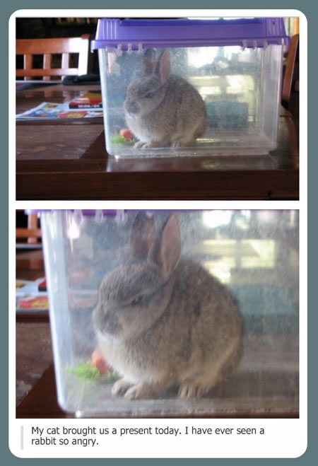 I've never seen a rabbit so angry...holy crap, maybe that cat should watch its back!