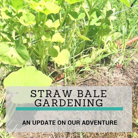 ideas about Straw Bale Gardening on Pinterest