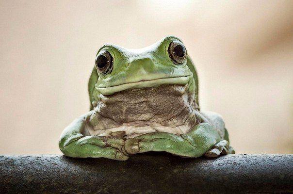 Забавные портреты лягушек
