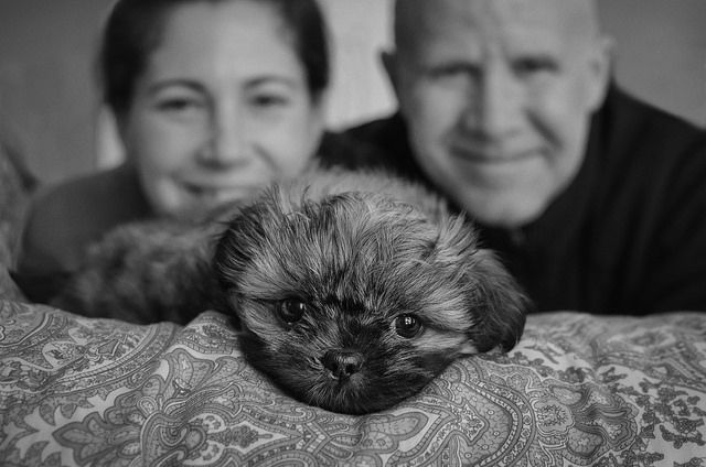 7 week old shitzu puppy with his new parents. Cutest dog named Thunder.