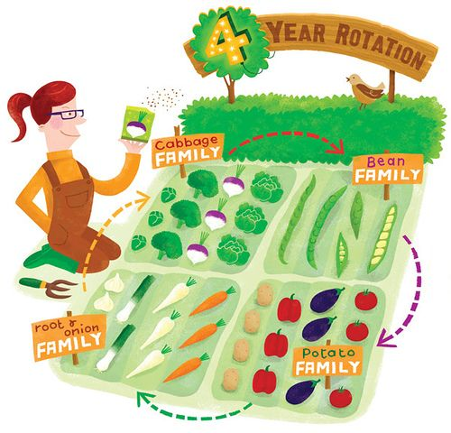 Crop Rotation is FUN! by Linzie Hunter